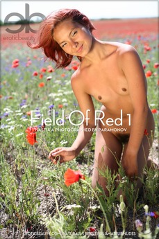 Field Of Red 1