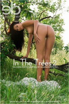 In The Trees 2