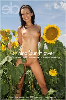 Shining Sun Flower